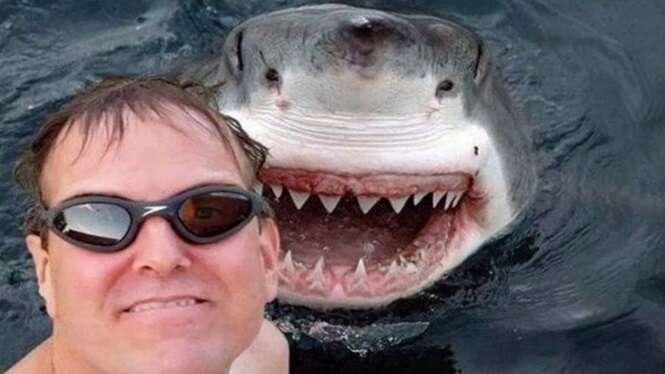 As melhores selfies feitas com animais