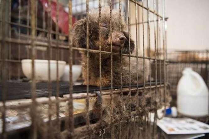 Este cãozinho passou anos em uma gaiola, mas agora sabe o que é o amor de um ser humano