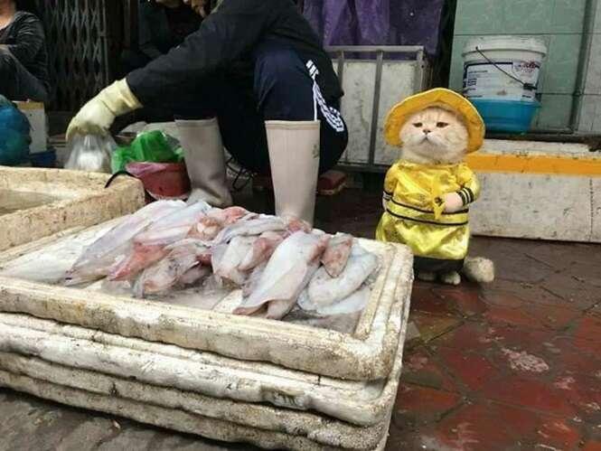 Conheça o mais fofo vendedor de peixes do Vietnã, que está conquistando a internet