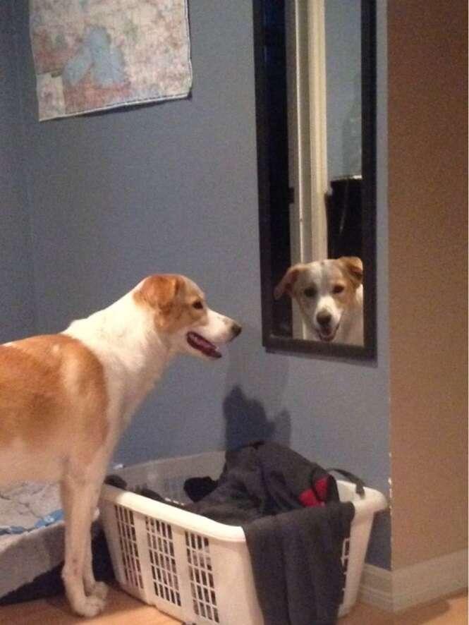 Cães que agiram muito estranhamente