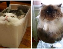 12 imagens mostrando que os gatos podem aderir à forma líquida quando desejam