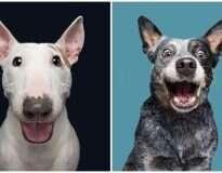 Fotógrafo registra imagens de cães visando mostrar que cada um destes animais é único