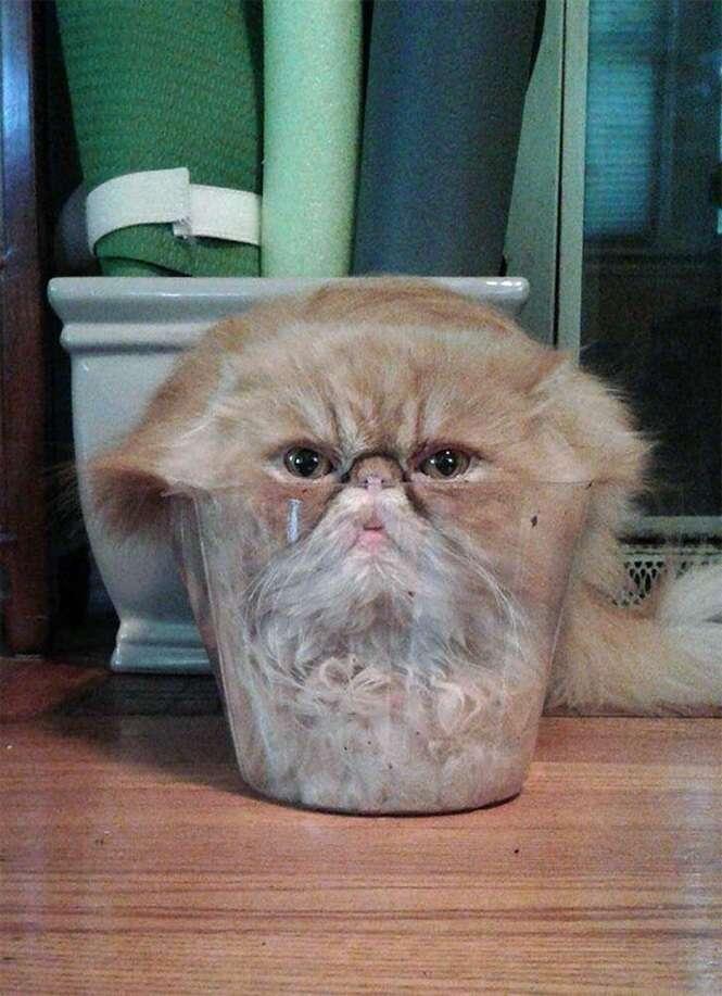 Imagens mostrando que os gatos podem aderir à forma líquida quando desejam